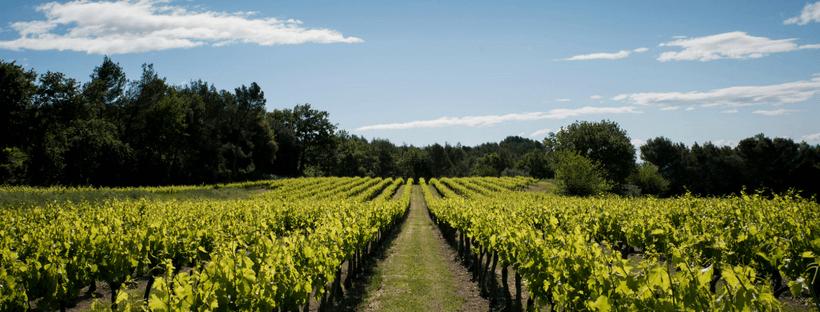 wijngaarden Laudun Chusclan