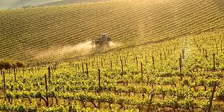Vineyards Geografico