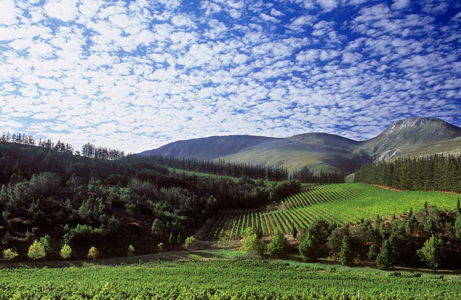 Paul Cluver Vineyards