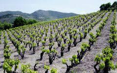 Vineyards Mas Janeil