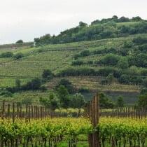 Nardello Vini